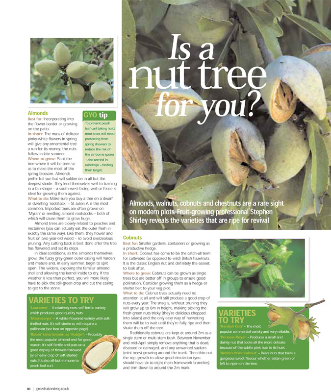 Image of the magazine article 'Is A Nut Tree For You'