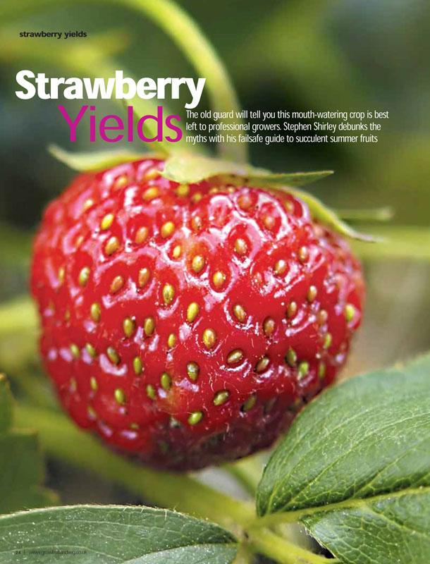 Image of the magazine article 'Strawberry Yields'