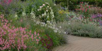 Image of an established herbaceous border.