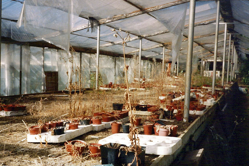 The Aftermath of Receivership - A Mess Of Plants Left To Die!
